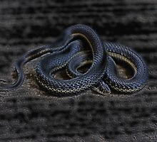 Little Old Gardner Snake by Jonice
