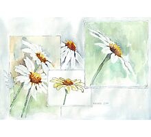 The Little Daisy  Photographic Print
