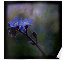 Forget-Me-Not Poster