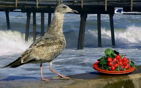 Still Life With Gull and Radishes by paintingsheep