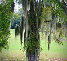 Medusa Tree by Kathy Yates