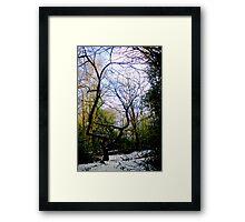Wispy willow Framed Print