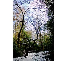 Wispy willow Photographic Print
