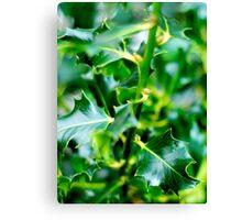 green prickles Canvas Print