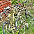 Old Bikes by m4rtys
