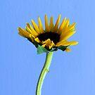 Simply Sunflower by Carrie Bonham