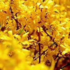Sea of yellow by imagesmatter