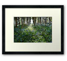 Bluebell Glimmer Framed Print