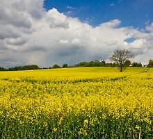 Summer Fields in Staffordshire by Steven Cliff