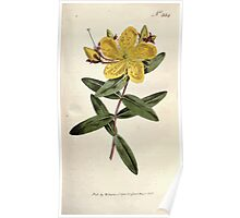 The Botanical magazine, or, Flower garden displayed by William Curtis V9 V10 1795 1796 0102 Hypericum Monogynum Chinese Saint Johns Wort Poster