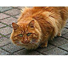 Wary Kitty Photographic Print