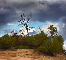 Hawks in waiting - Lake Mungo by Hans Kawitzki