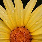 Tears of the Sun by Alex Boros
