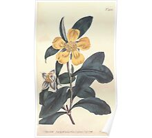 The Botanical magazine, or, Flower garden displayed by William Curtis V13 V14 1799 1800 0038 Dillenia Speciosa Shewy Sillenia Poster