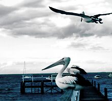 Grey sky flight by sebastian