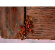Ladybugs Photographic Print
