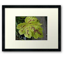 Wine and Cheese Leaf Framed Print