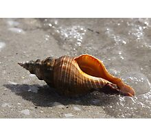 Sea Shells By The Sea Shore Photographic Print