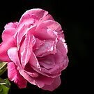 Perfectly Pink by Rosalie Scanlon