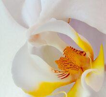 White Orchid by IdahoJim