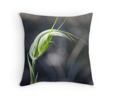 Autumn Greenhood. Pterostylis revoluta Throw Pillow