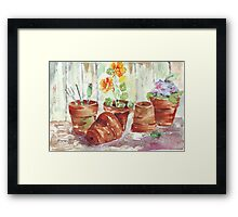 Another Shelf in my Garden Shed Framed Print