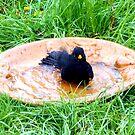 Black bathing in the garden by Heidi Mooney-Hill