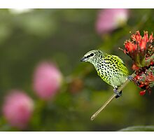 Tiny Feathered Friend Photographic Print
