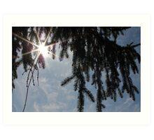 Evergreens...the Eternal Optimists Art Print