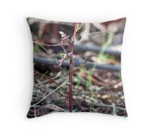 Small Mosquito orchid.  Acianthus pusillus Throw Pillow