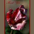 Thank You Card Pink and Light Pink Rose by Joy Watson