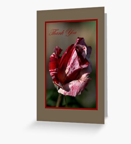 Thank You Card Pink and Light Pink Rose Greeting Card