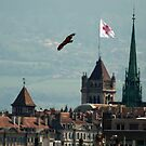 Black Kite over Geneva by David Freeman