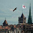 Black Kite over Geneva by David Freeman