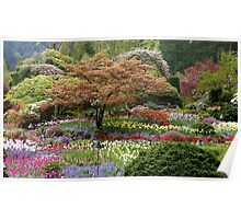 Layers of Colour in Butchart Gardens Poster