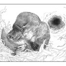 Platypus baby ('puggle' or perhaps 'platypup'?) in nest by Laura Grogan