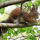 Squirell Eating flowers on a tree by David Freeman