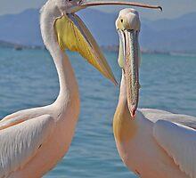 Pelican Crossings by megative