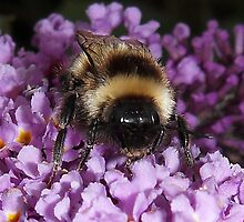 The Bumble by sarnia2