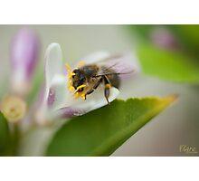 Bee Beautiful Photographic Print