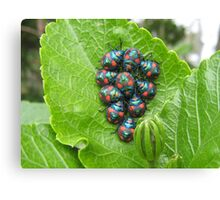 Guess Who Had Baby Beetles. Canvas Print