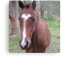Equine Beauty. Metal Print