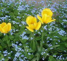 Three yellow tulips by Ana Belaj