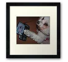 Who Is This Dog On Your Phone? (The Betrayal)  Framed Print
