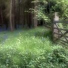 Bluebell Gate by Ann Garrett