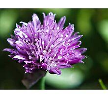 sage bloom Photographic Print