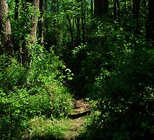 Path in the wood,  by Jeff Stroud