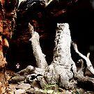 Alligator Gorge by Elaine Game