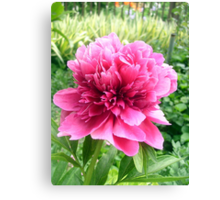 Peony--just for you! Canvas Print