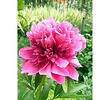 Peony--just for you! Photographic Print